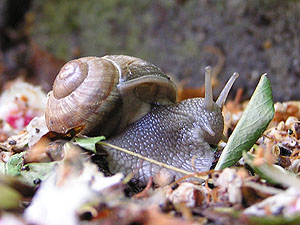 1000  images about Mollusks on Pinterest